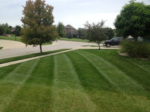 Premium Lawn Mowing and Edging