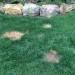 Dog Spots