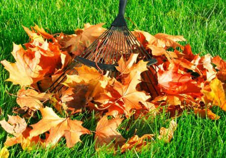 Raking leaves Spring