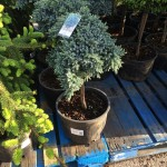 PLANTING FLOWERS, SHRUBS and TREES