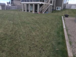 Best Lawn Aeration in Lethbridge 2