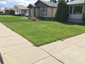 Lawn Edging before #2