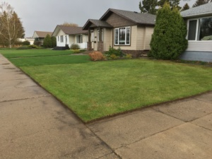 Lawn Edging after #2